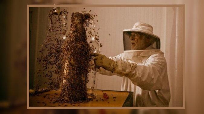 """""""Bienenskulpturen"""": Wie 80 000 Bienen unter Anleitung eines Künstlers Kunstwerke schaffen, Details"""