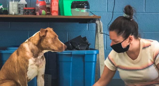 Hund und Mensch. Quelle: Screenshot YouTube