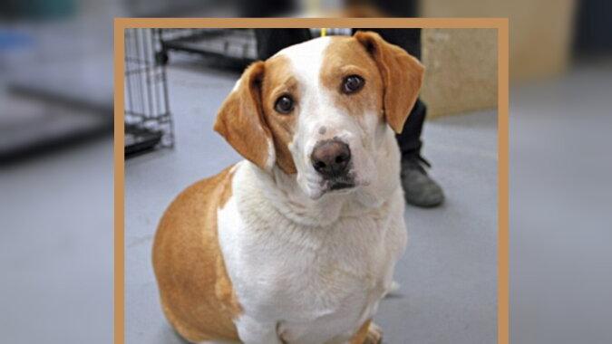Ein Hund. Quelle: dailymail.co.uk