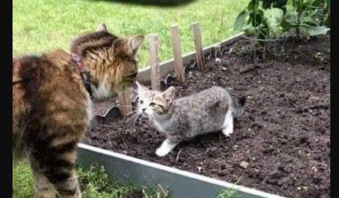 Kätzchen und Katze. Quelle: Screenshot YouTube