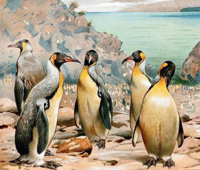 """""""Urzeitliche Riesen"""": Früher gab es auf dem Planeten riesige Pinguine, Details"""