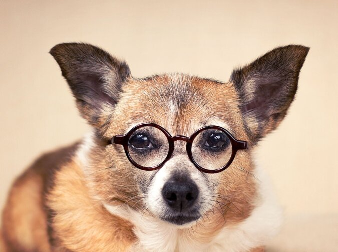 Der Hund. Quelle:dailymail.co.uk