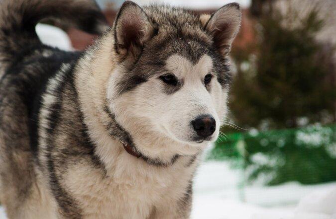 """""""Das ist mein letztes Geschenk"""": Die Besitzerin hielt ihr Versprechen an ihren Hund, bevor er sie verlässt"""