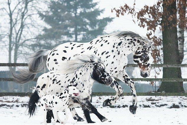 """""""Fast Zwillinge"""": Pferde, Ponys und ein Hund mit der gleichen Farbe haben Spaß zusammen"""