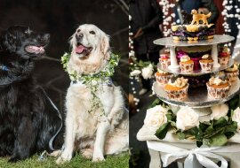 Hochzeit des Hundes. Quelle:swns.com