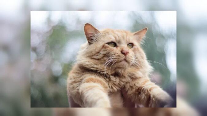Die Katze. Quelle: goodhouse
