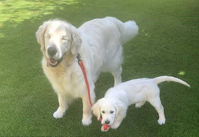 Alter Hund, der nicht mehr sehen kann, hat einen kleinen Führerfreund