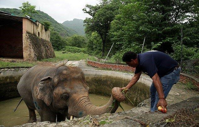 Der einsamste Elefant der Welt findet sein Zuhause nach 35 Jahren Einsamkeit