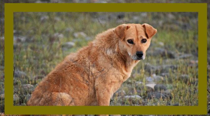Ein streunender Hund. Quelle: wikipet
