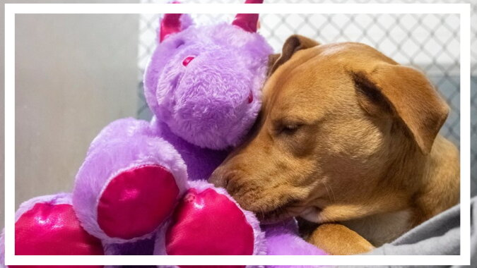 Ein Hund mit dem Spielzeug. Quelle: esquire