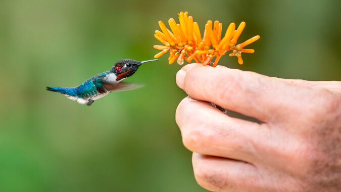 Kolibri. Quelle: Screenshot YouTube