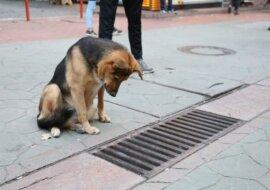 Der Hund schaut jeden Tag stundenlang in die Gitterstäbe und sieht mehr als alle anderen
