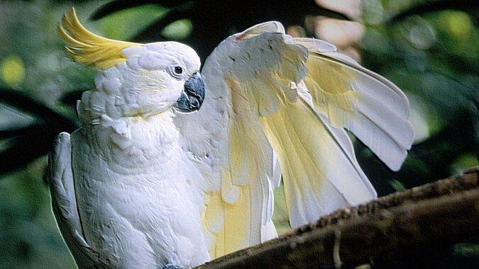 Der Papagei. Quelle: thesprucepets