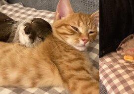 Otter und Kater. Quelle:dailymail.co.uk
