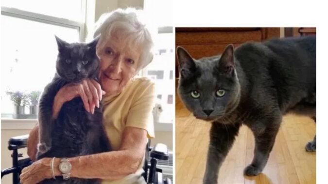 Die alte Frau und die Katze. Quelle: bezkota