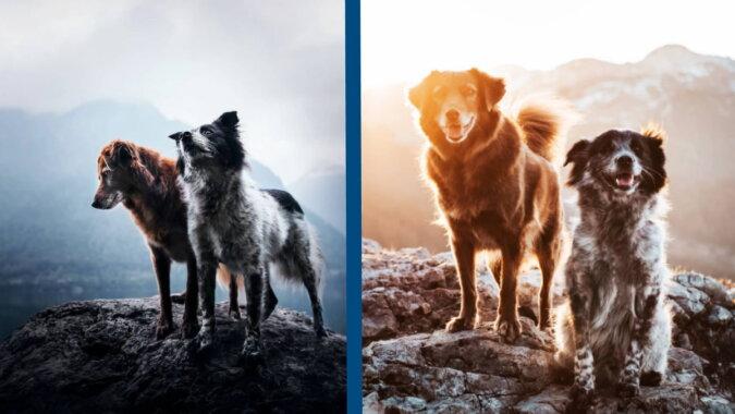 Hunde Yuri und Finn. Quelle: instagram