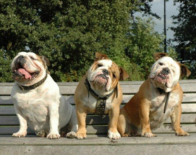 Die drei Musketiere: Wie drei Hunde Probleme in ihrem Auto lösen