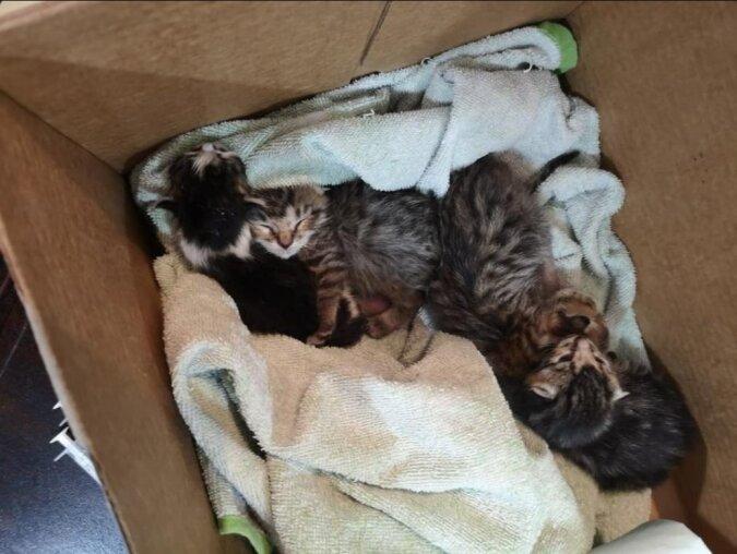 Die verwaisten Kätzchen aus verschiedenen Würfen haben sich vereinigt, um zu überleben