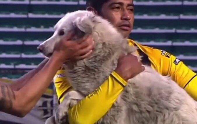 Ein streunender Hund lief während eines Spiels auf das Spielfeld und stahl den Schuh eines Fußballers: es half ihm, ein Zuhause zu finden
