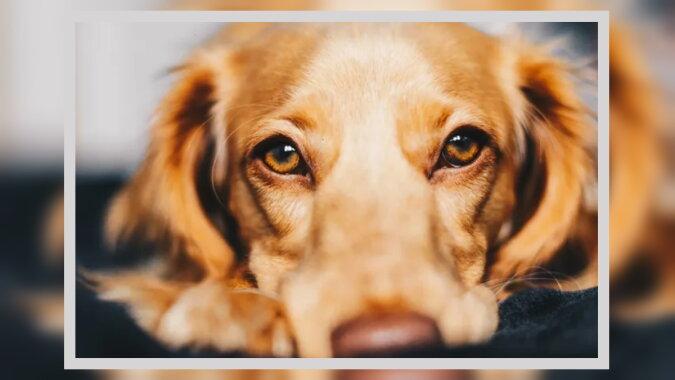 Treffen von besten Freunden: Der Hund hat seine Besitzerin stundenlang nicht verlassen, als er sie nach langer Trennung gesehen hat