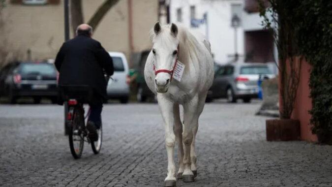 Das Pferd Jenny. Quelle: goodhouse