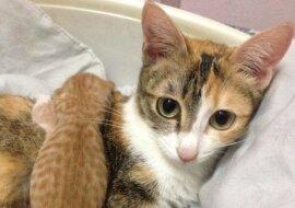 Katze und Kätzchen. Quelle: petpop.com