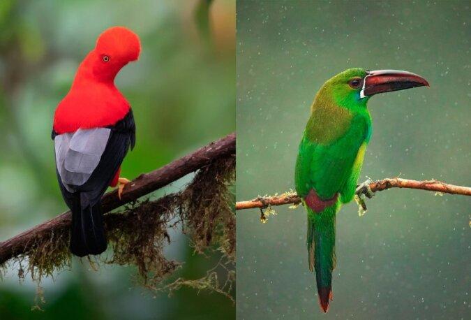 Paradiesvögel: gefiederte Bewohner des Dschungels