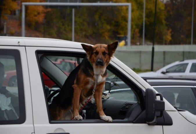 Die Besitzer ließen den Hund für einen Monat bei ihren Bekannten, aber er wartete darauf, dass sie ihn zurücknehmen werden