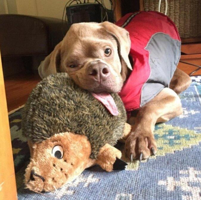 Unschöner Hund fand sich trotz allem liebevolle Besitzer