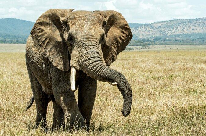 """""""Erfolgreiche Operation"""": Der Elefant wurde nach 14 Stunden aus dem Brunnen gerettet, Details"""
