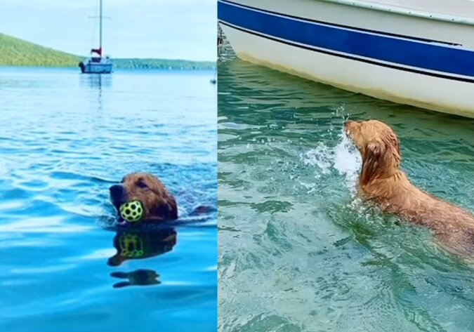Der zweijährige Hund Quincy. Quelle:dailymail.co.uk