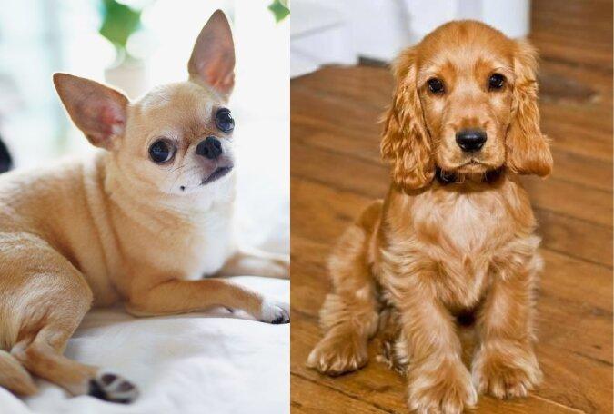 Die beliebteste Hunderasse. Quelle:dailymail.co.uk