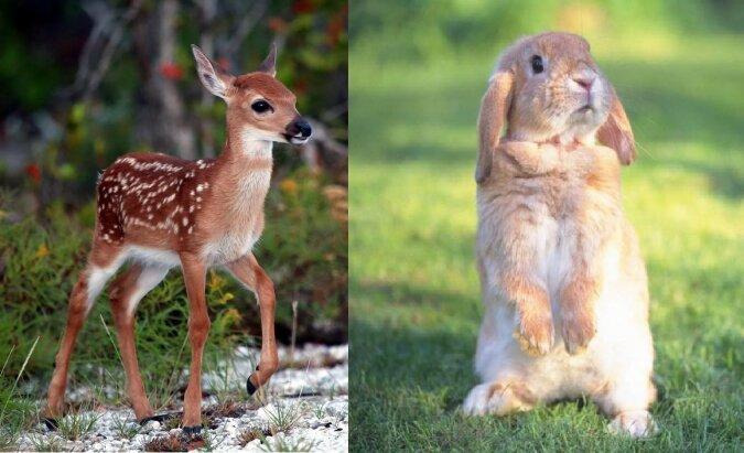 Das Rehkitz und das Kaninchen. Quelle:dailymail.co.uk