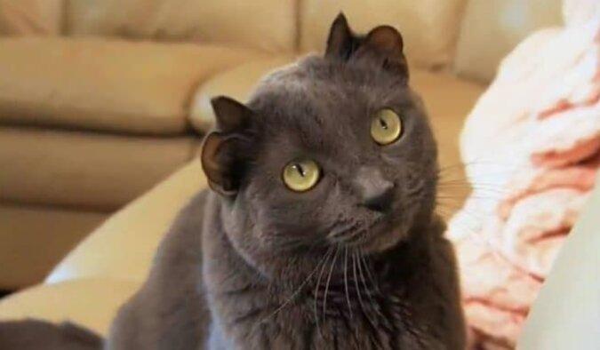 """Eine ganz normale Katze brachte unter dem """"Glücksstern"""" ein einzigartiges Kätzchen zur Welt"""