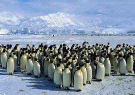 """""""Ein offenes Gespräch"""": Zwei Gruppen von Pinguinen trafen sich, um sich zu unterhalten"""