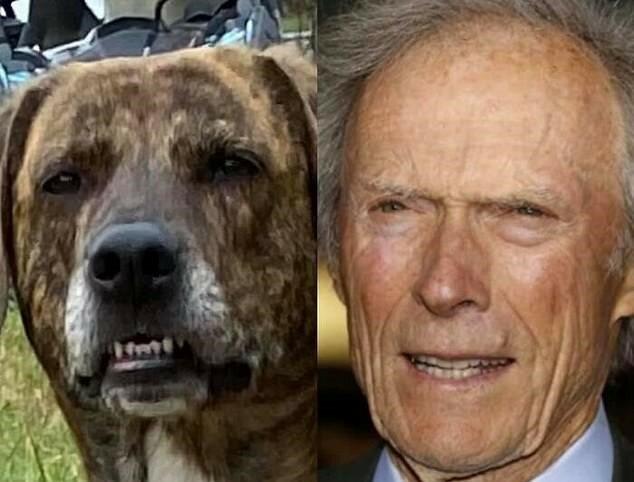 """""""Plötzliche Ähnlichkeit"""": Social-Media-Nutzer haben Fotos mit berühmten Doppelgängern ihrer Haustiere geteilt"""