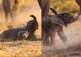Elefantenbaby. Quelle:dailymail.co.uk