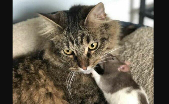 Die Katze mit dem Freund. Quelle: zen.yandex