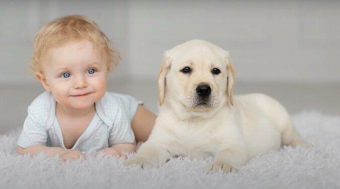 Baby und Hund. Quelle: Screenshot YouTube