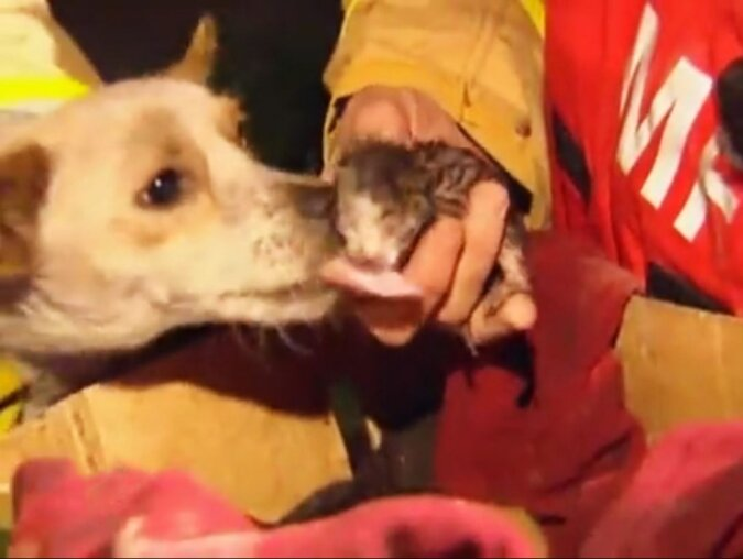 Feuerwehrmänner konnten nicht verstehen, warum das kleine Hündchen das brennende Haus nicht verlassen wollte