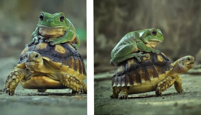 Eine Schildkröte und ein Frosch. Quelle: dailymail