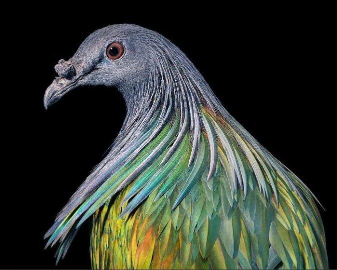 """""""Passfoto"""": Ein Fotograf fotografierte seltene Vögel, als wären sie Menschen"""
