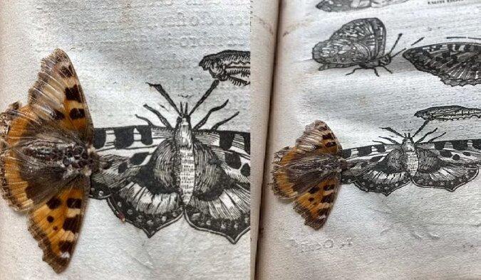 """""""Theater der Insekten"""". Quelle:dailymail.co.uk"""