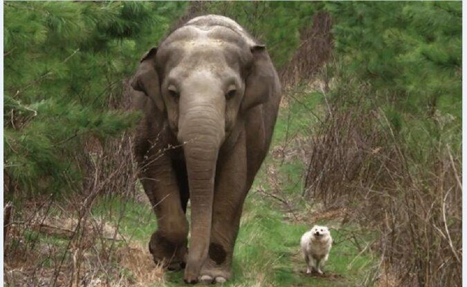 Elefant und Hund. Quelle: Screenshot YouTube