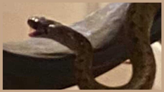 Eine Schlange zu Hause. Quelle: hindustantimes