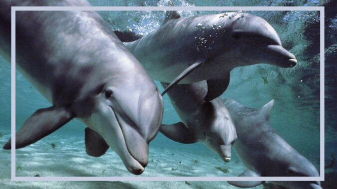 Delfine. Quelle: bigpicture