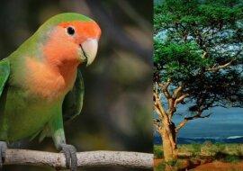 Papagei. Quelle: Screenshot YouTube
