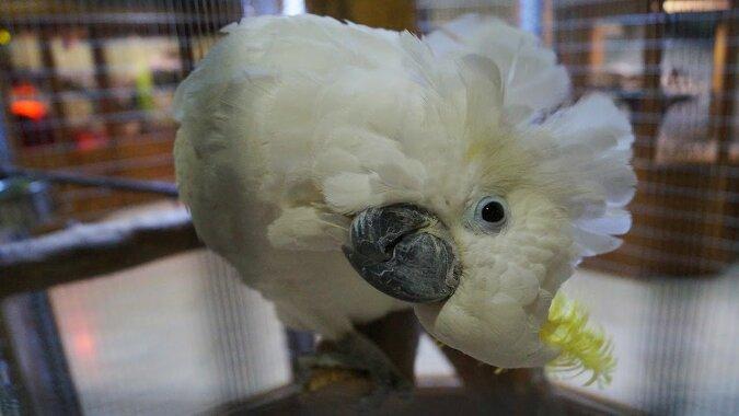 """""""Unerwarteter Gast"""": Eine Frau fing einen Papagei, als er versuchte, ihr Haus zu betreten"""