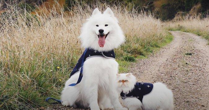 Hund und Kater. Quelle: Screenshot YouTube