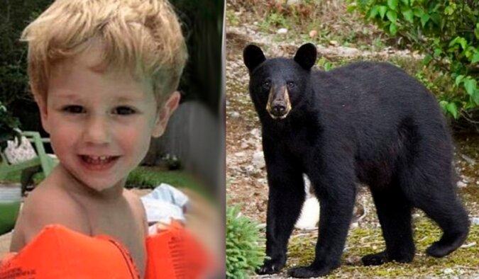 Retter fanden im Wald einen verirrten Jungen: Das Kind sagte, ein Bär habe ihm geholfen zu überleben